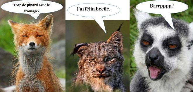 Humoristique - Animaux humoristiques ...