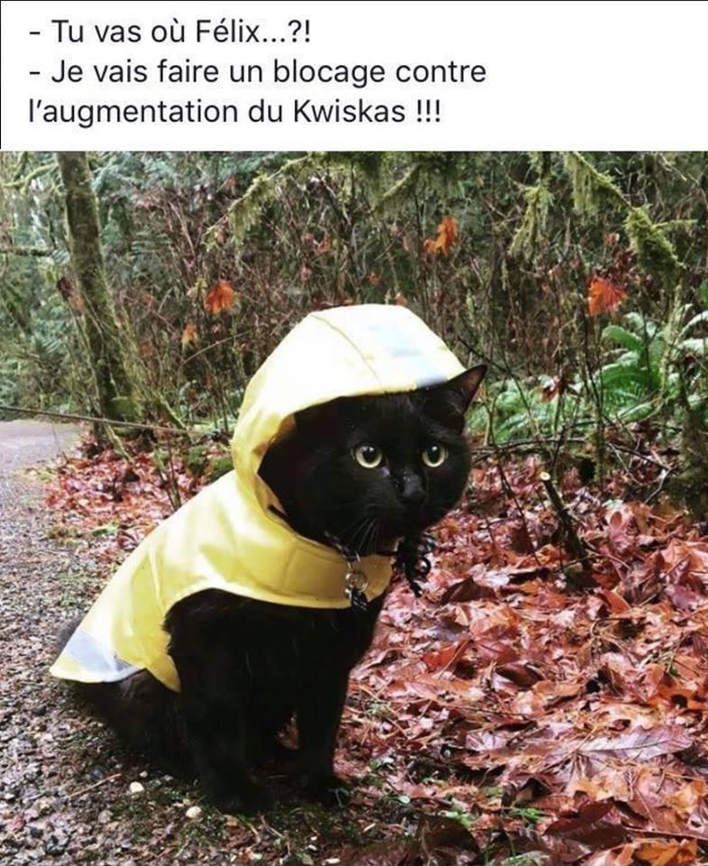 """Résultat de recherche d'images pour """"gilet jaune humour"""""""